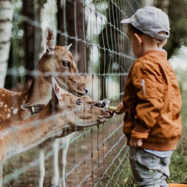 A young boy feeding animals at a zoo