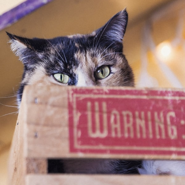 A cat in front of a warning sign